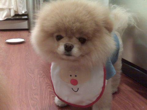 Γνωρίστε τον πασίγνωστο σκύλο Βοο